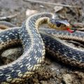 Top 10 Most Deadliest Snakes Of The World